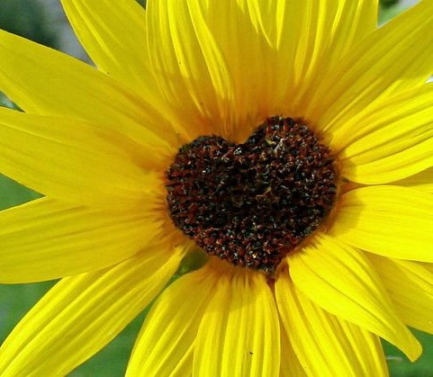 Любовь цветущая