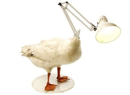 Светильник-чучело